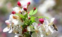 Bővebben: 13. Hét: Mennyei Atyánk gyümölcsöt keres a fán!!